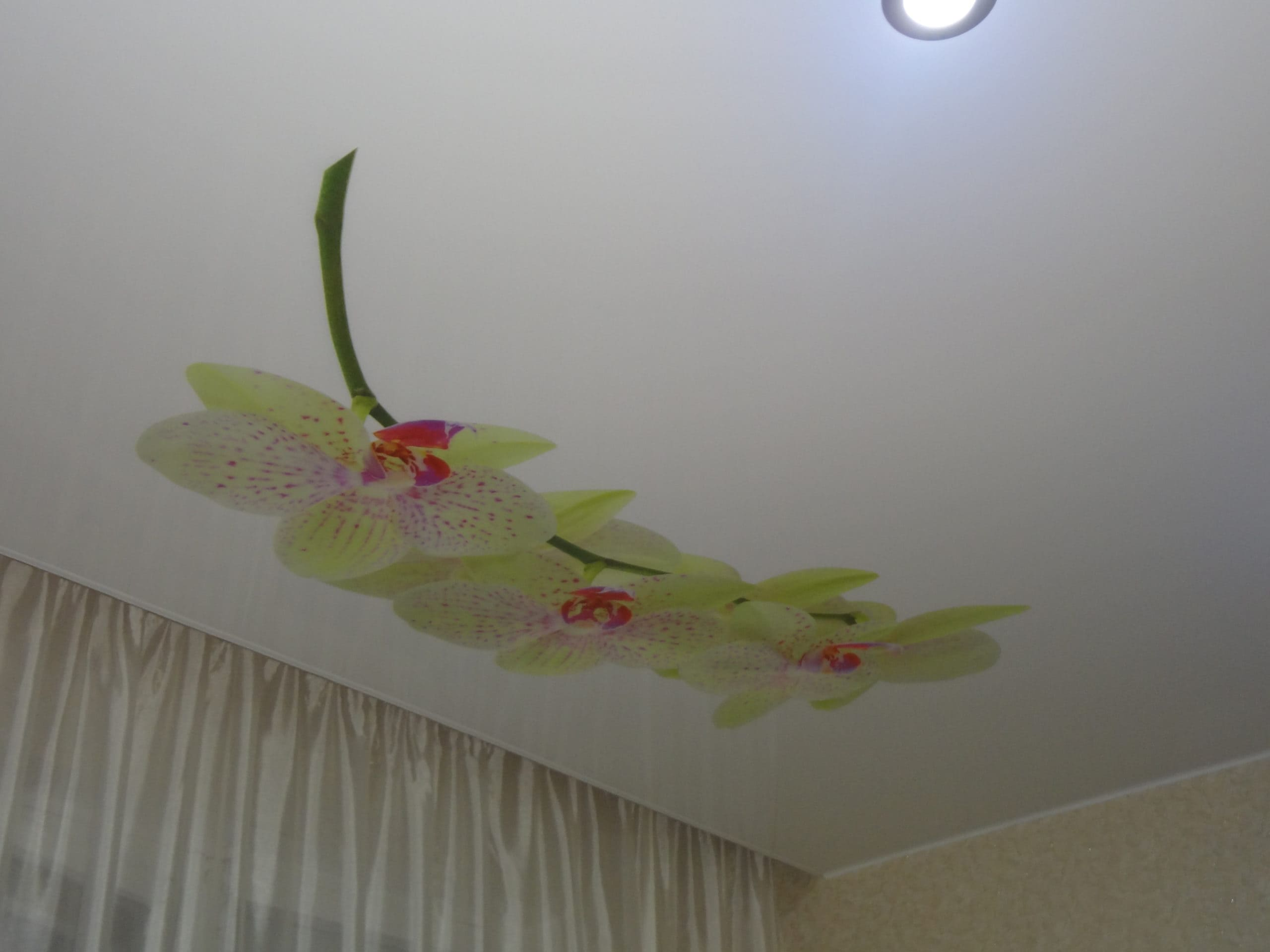 Натяжной потолок с фотопечатью Цветок