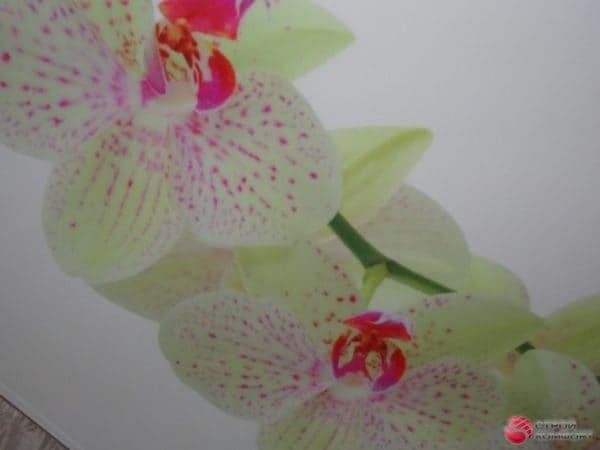 Матовый белый натяжной потолок с фотопечатью Цветы - галерея Строй Комфорт
